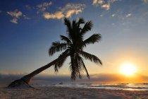 Тулум пляж закат и пальмовое дерево в Ривьера Майя в Майя Мексика — стоковое фото