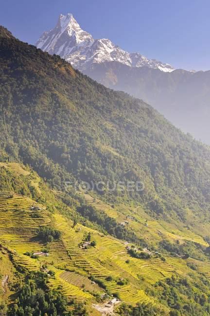 Champs en terrasses et Machapuchare montagne dans la zone de Conservation de Annapurna au Népal — Photo de stock