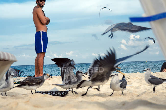 Man watching seagulls fighting on beach sand in Playa del Carmen, Mexico. — Stock Photo