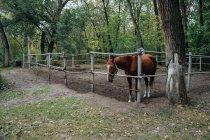 Лошадь за деревянным забором в загоне — стоковое фото