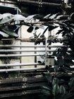 Філії та труби в ботанічному саду зелений будинок — стокове фото