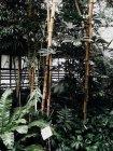 Plants at botanical garden green house — Stock Photo