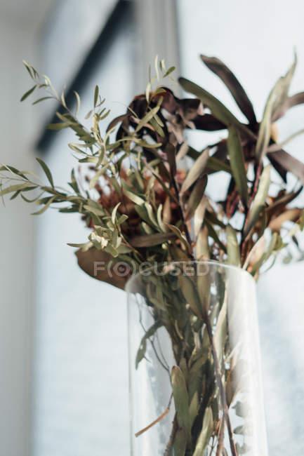 Крупный план сушеных растений в стеклянной вазе — стоковое фото
