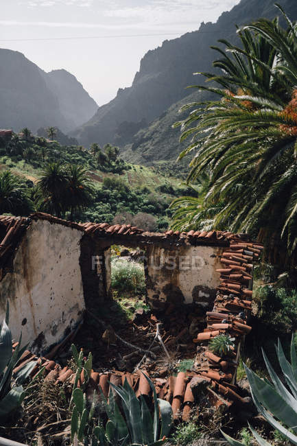 Old abandoned house in tropical park — Stock Photo
