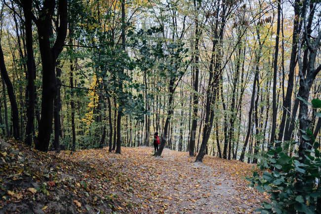 Jeune homme avec sac à dos de marche entre les grands arbres sur la colline — Photo de stock