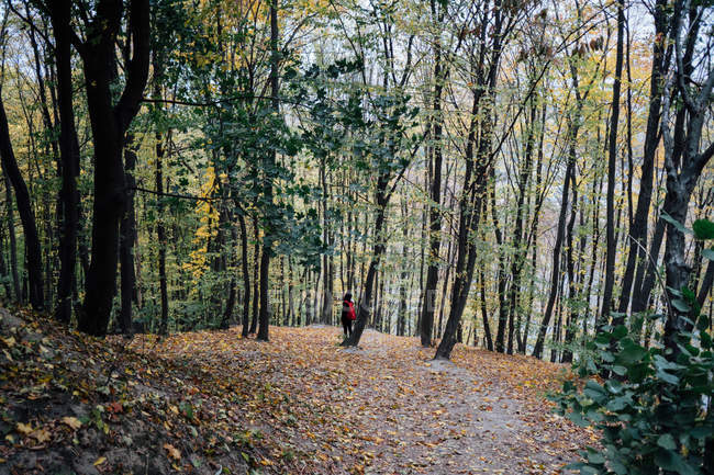 Young man with backpack walking among tall trees on hill — Stock Photo