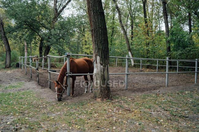 Caballo detrás de una cerca de madera en el paddock - foto de stock
