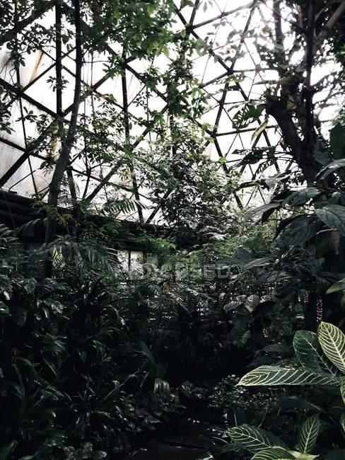 Vista de ângulo baixo de plantas na casa verde — Fotografia de Stock