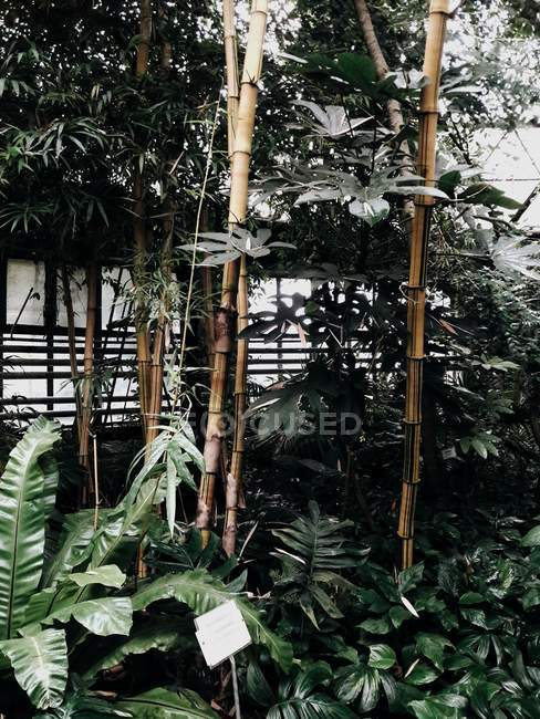 Plants at botanical garden green house — Stock Photo