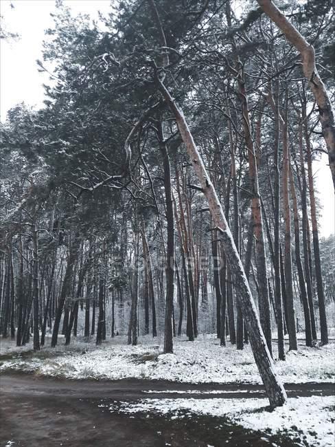 Vista para a floresta no campo de inverno — Fotografia de Stock