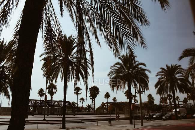 Idyllischer Blick auf Palmen wachsen an sonnigen Tag — Stockfoto