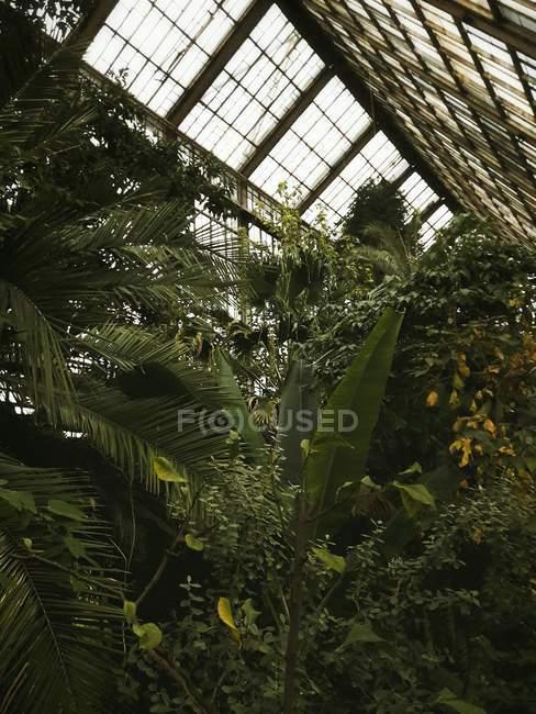 Зелені рослини в теплиці — стокове фото