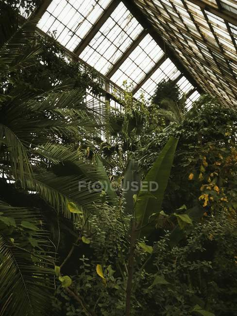 Green plants at greenhouse — Stock Photo