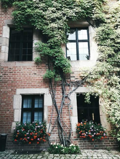 Vista esterna della facciata in mattoni abbracciato con piante — Foto stock