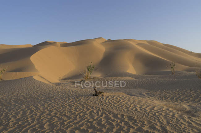 Dune nel quarto vuoto con alcune piante del deserto sulla sabbia, Oman — Foto stock
