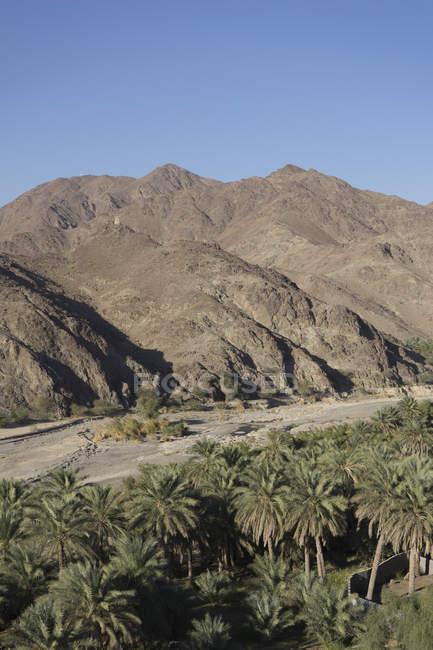 Samail, Oman ein enges Tal Datum Plantagen südlich von Muscat, historisch bedeutsame aufgrund seiner Lage an der Spitze von einem schmalen pass durch die Berge: die sogenannten Sumail Gap — Stockfoto