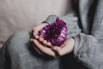 Child hands holding Aster blossom — Stock Photo