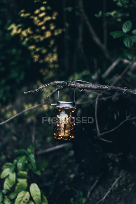 Vintage lantern hanging on tree branch in woods — Stock Photo