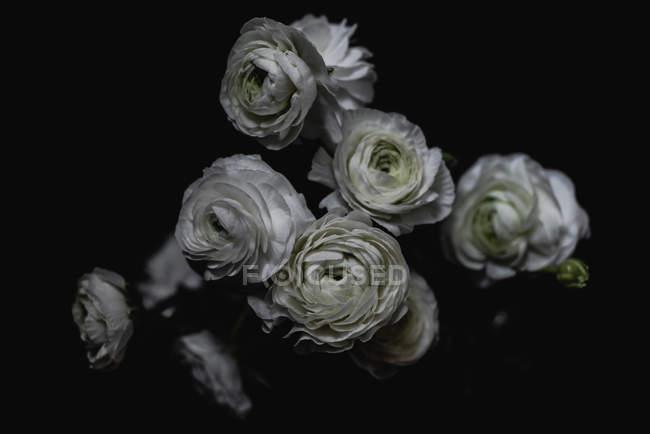 Bouquet de roses blanches sur fond sombre — Photo de stock