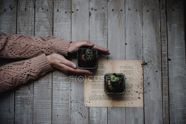 Female hands holding potted succulent plants on wooden table — Stock Photo