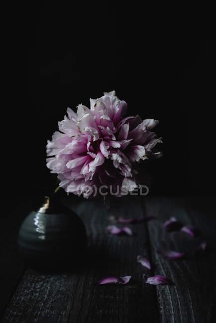 Flor de peônia rosa em vaso vintage na mesa rústica — Fotografia de Stock
