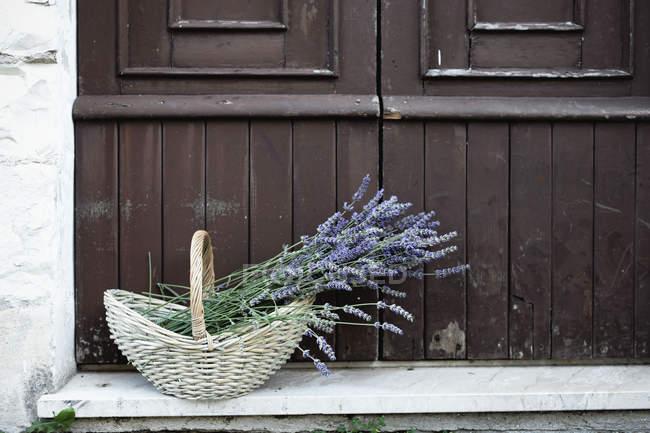 Plantas de lavanda en canasta de mimbre en porche - foto de stock