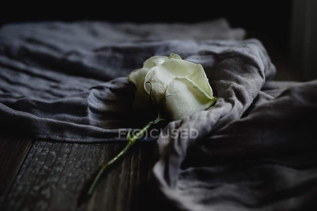 Close-up de rosa branca no xale na mesa de madeira — Fotografia de Stock