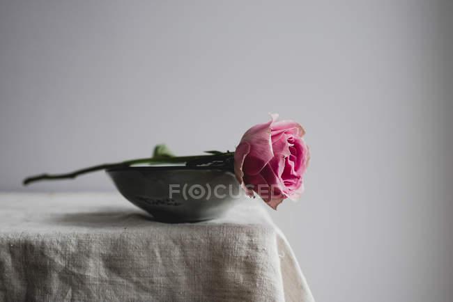 Розовая роза в миске на углу стола, крупным планом — стоковое фото