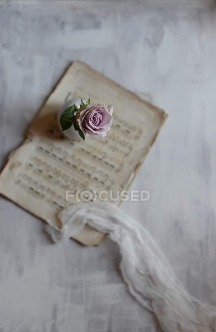 Pink rose on table with sheet music — Stock Photo
