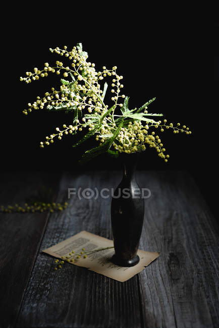 Black vase with mimosa on vintage sheet of poetry on wooden table — Stock Photo