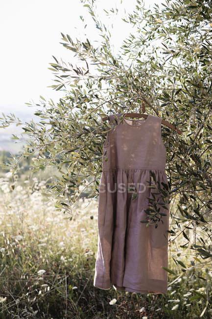 Vestito di lino appeso al ramo d'albero in giardino — Foto stock