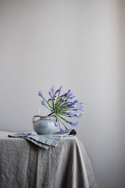 Agapanthus plant with purple flowers in ceramic vase on table — Stock Photo