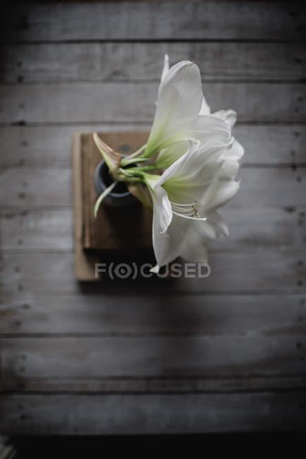Flores de lirio blanco en jarrón sobre pila de libro sobre fondo de madera - foto de stock