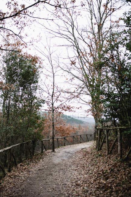 Scène extérieure avec des arbres automnales le long de la route dans le parc — Photo de stock