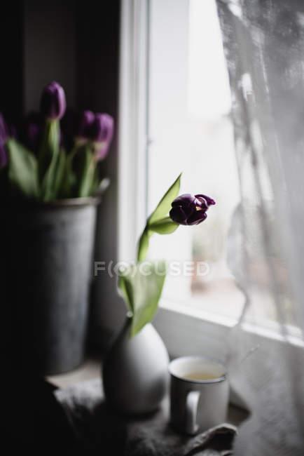 Фиолетовые тюльпаны в вазе и ведро на подоконнике — стоковое фото