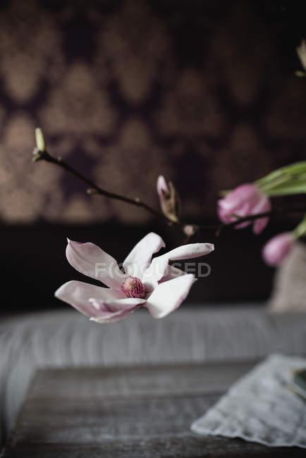 Крупный план розового цветка орхидеи на ветке — стоковое фото