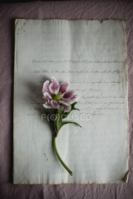 Lily flower on vintage paper sheet — Stock Photo