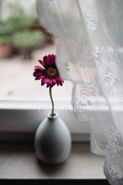 Pink Gerbera flower in vase on window sill — Stock Photo