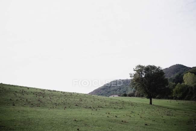 Scène extérieure de l'arbre dans champ de campagne verte — Photo de stock