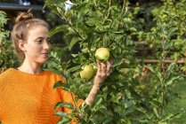 Young woman holding apples on tree in garden — Stock Photo