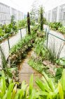Jardin botanique de plantes, Rio de Janeiro, Brésil — Photo de stock