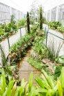 Botanical garden with plants, Rio de Janeiro, Brazil — Stock Photo