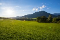 Grüne Wiese und Hügel im Hintergrund, Steiermark, Österreich — Stockfoto