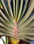 Nahaufnahme der grünen Aloe-Pflanze — Stockfoto