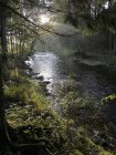 Gebirgsbach Fluss mit Pflanzen am Ufer — Stockfoto