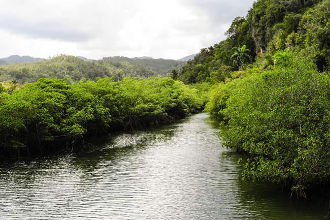 Cuba, Guantanamo, Baracoa, nature park Yunque and river stream — Stock Photo