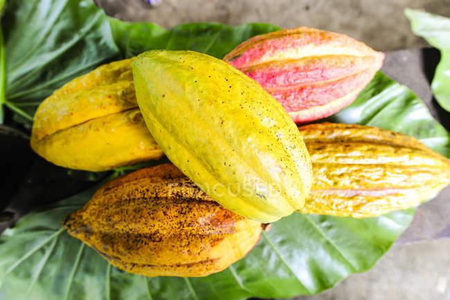 Желтые фрукты Баракоа на зеленые листья — стоковое фото