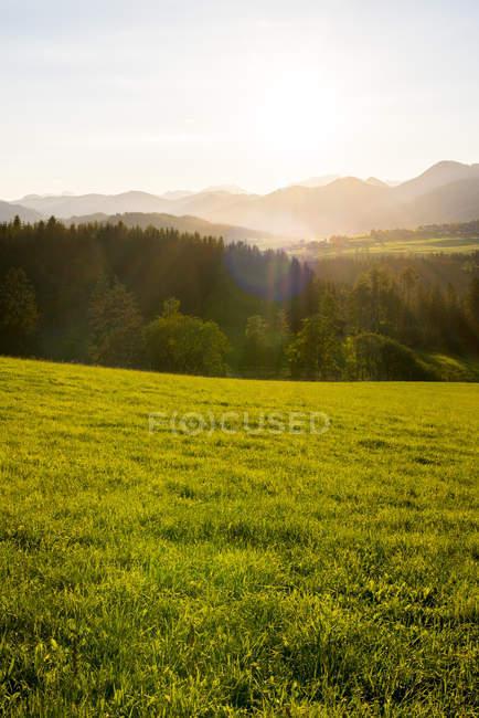 Vista del campo di erba verde e alberi su backgroud — Foto stock