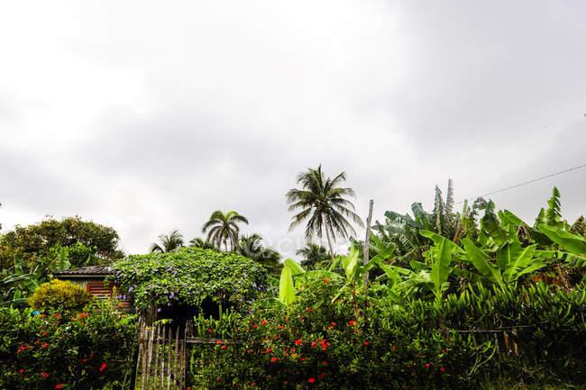 Тропический лес в дневное время, Куба, Гуантанамо, Баракоа — стоковое фото