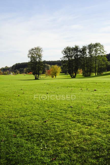 Campo di erba verde con alberi, Austria, Stiria — Foto stock